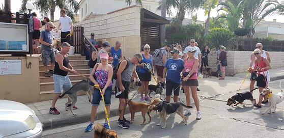 Paralimni Charity Dog Walk