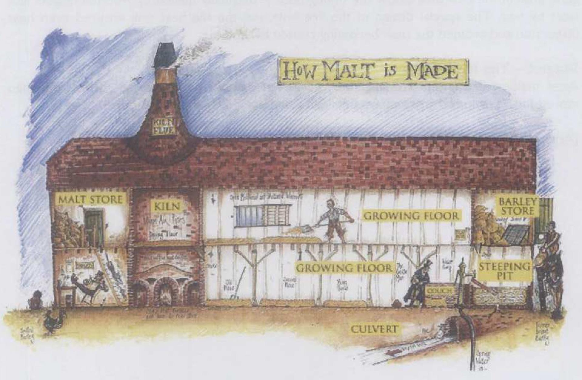 How malt is made.jpg